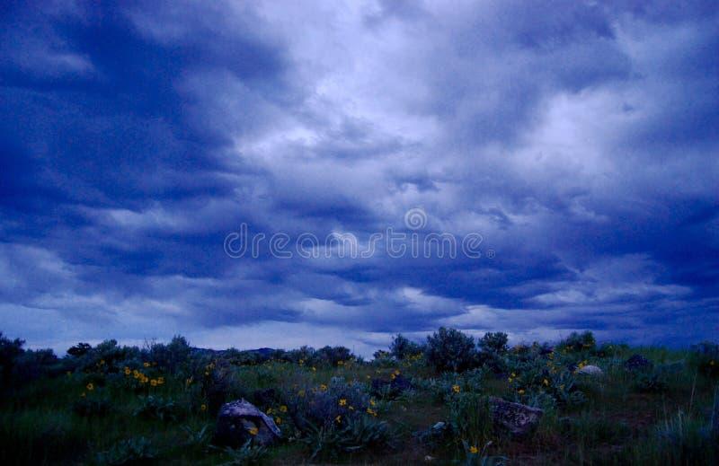 Den blåa timmen fördunklar över Arrowleaf balsam royaltyfria foton