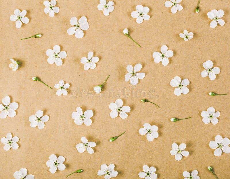 Den blom- modellen som göras av den vita våren, blommar och slår ut på bakgrund för brunt papper Lekmanna- lägenhet arkivfoto