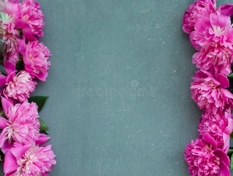 Den blom- ramen med rosa pioner blommar på wood bakgrund Selektiv fokus, ställe för text, bästa sikt royaltyfri fotografi