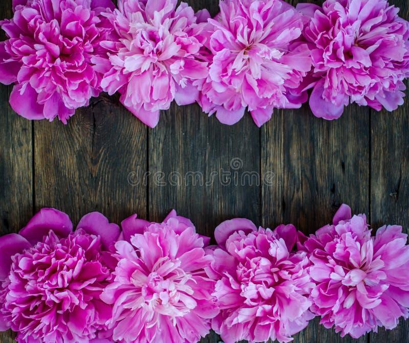 Den blom- ramen med rosa pioner blommar på wood bakgrund Selektiv fokus, ställe för text, bästa sikt royaltyfri bild