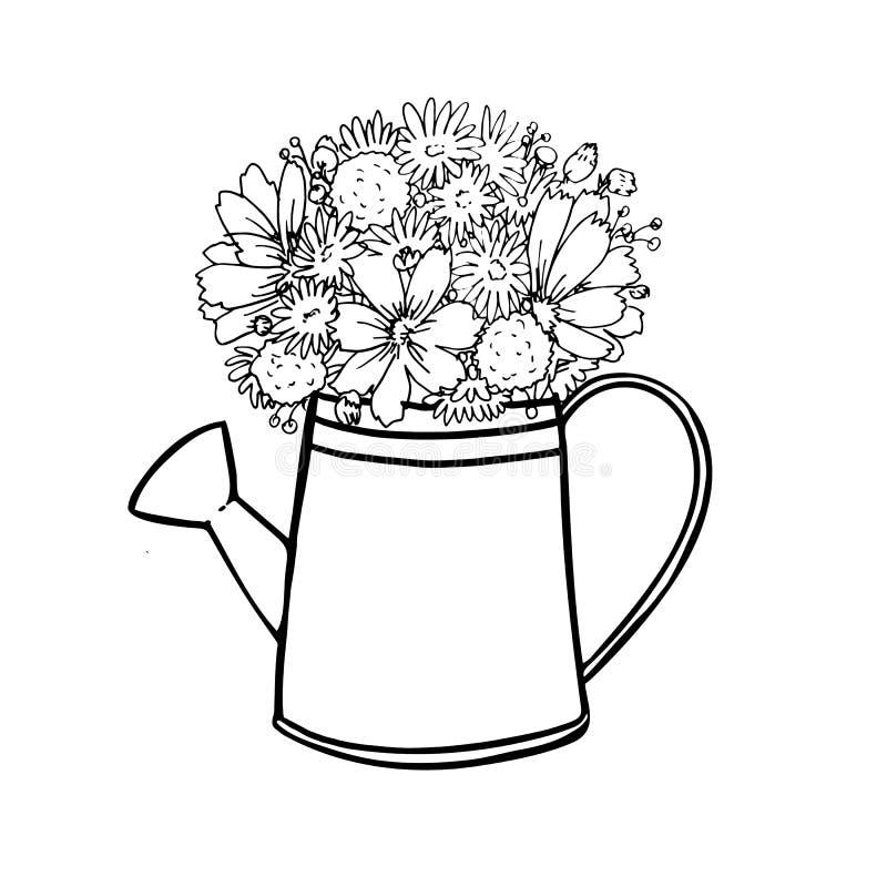 Den blommakosmos och kamomillen för hand kan utdraget i bevattna på en vit bakgrund royaltyfri illustrationer