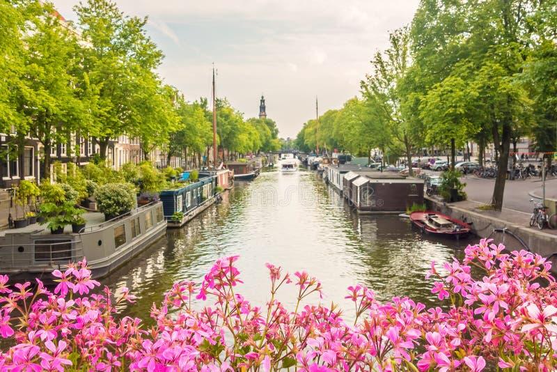 Den blommande rosa färgen blommar på en Amsterdam kanalbro fotografering för bildbyråer