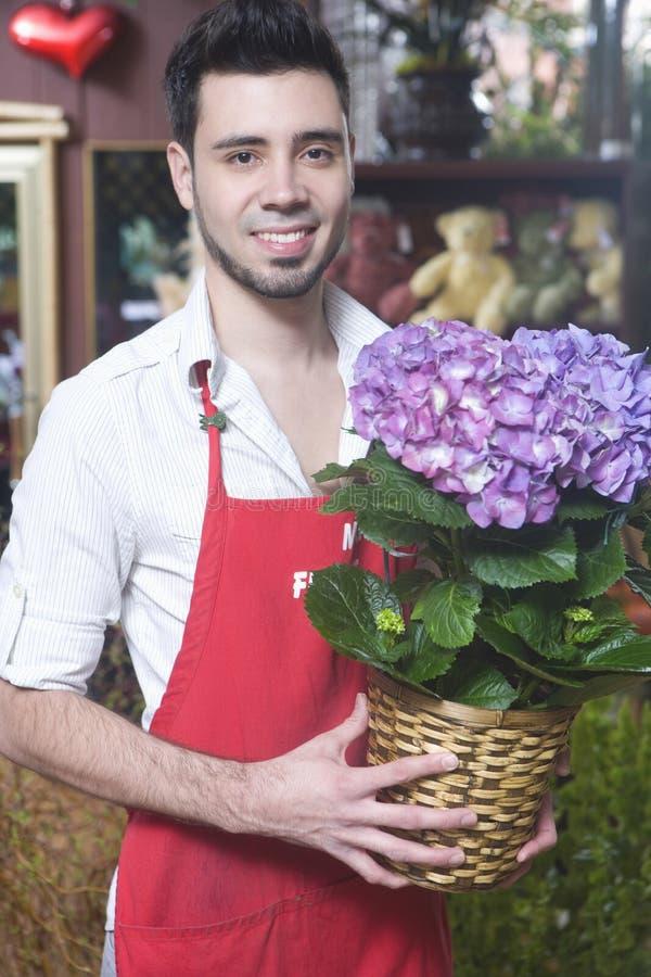 Den blomsterhandlareHolding Hydrangea Flower växten shoppar in fotografering för bildbyråer