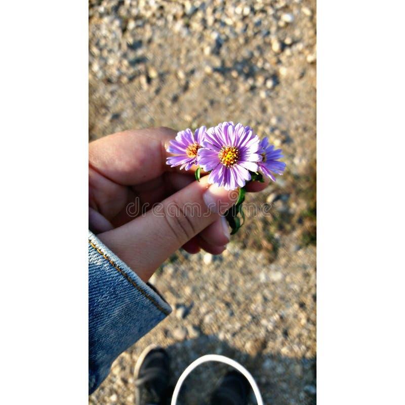 den blonda blomman royaltyfri foto