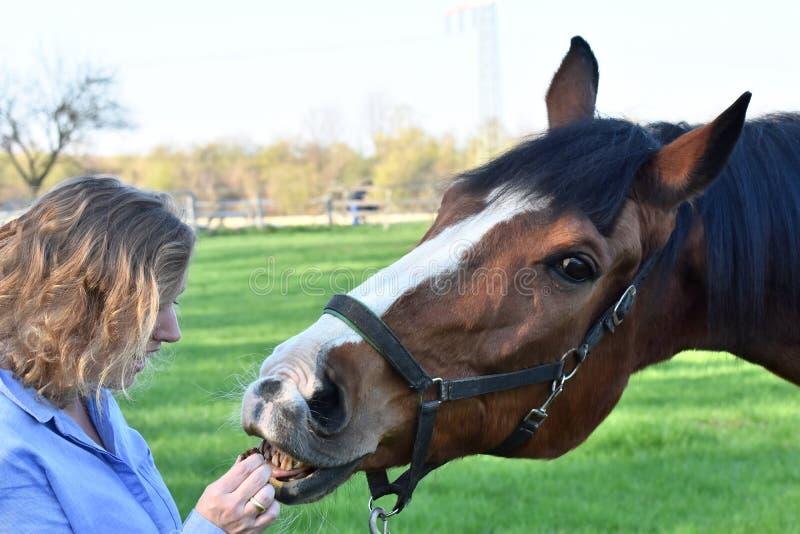 Den blonda kvinnan ger mat till hennes häst royaltyfri bild