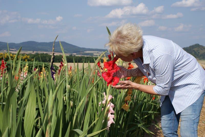 Den blonda kvinnan hänföras av den härliga röda blomman av gladiolusen arkivfoton