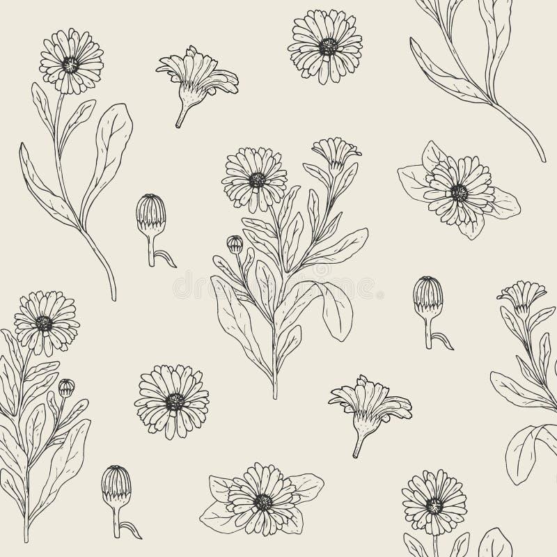 Den botaniska sömlösa modellen med den blommande calendulaväxten, snittblommahuvud och knoppar räcker utdraget med konturlinjer royaltyfri illustrationer