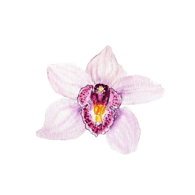 Den botaniska vattenfärgillustrationen skissar av den rosa tropiska orkidéblomman på vit bakgrund royaltyfri illustrationer