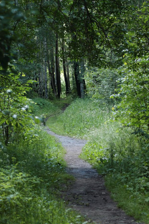 Den bra skogbanan för går arkivbilder