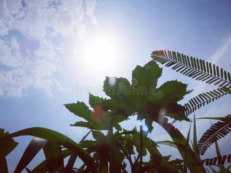 Den brinnande solen arkivfoto