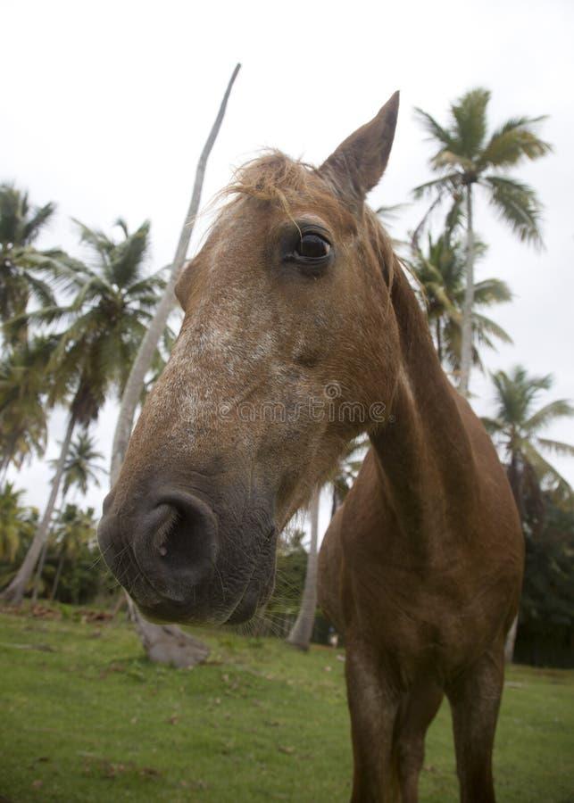 Den bruna hästen med en frågvis ögonkast royaltyfri fotografi