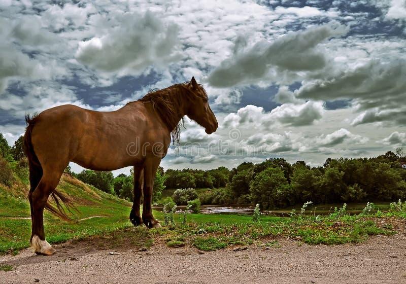 Den bruna hästen står på gräset på bankerna av floden under ett moln av himmel arkivfoto
