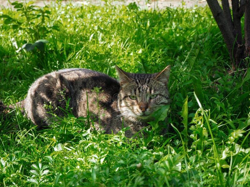 Den bruna katten lägger på det gröna gräset royaltyfri foto