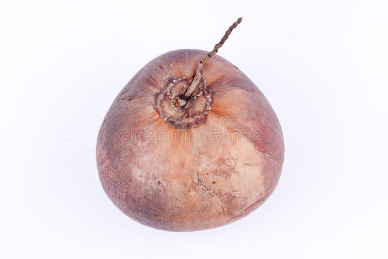 Den bruna mogna kokosnöten för kokosnöt mjölkar (den bästa sikten) på sund isolerad fruktmat för vit bakgrund arkivfoto