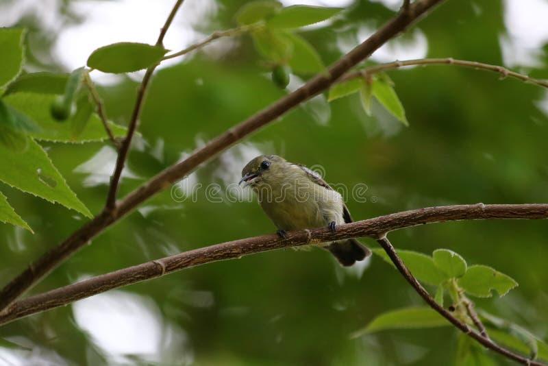 Den bruna strandfågel royaltyfri fotografi