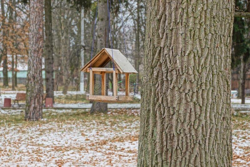 Den bruna tomma fågelförlagemataren på grått stort träd i vinter parkerar arkivfoto
