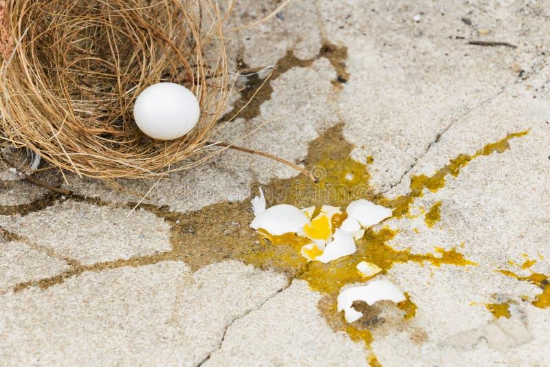 Den brutna äggfågeln, faller det ut ur rede med äggskalet och äggula av äggfågeln på grå färgstenjordningen Investering  arkivfoto