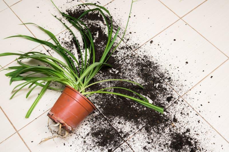 Den brutna blomkrukan med gröna växter ligger på kökgolvwina royaltyfri bild