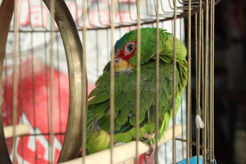 Den Caged papegojan öppnar dess öga arkivbilder