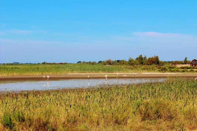 Den Camargue deltan, Frankrike royaltyfria foton