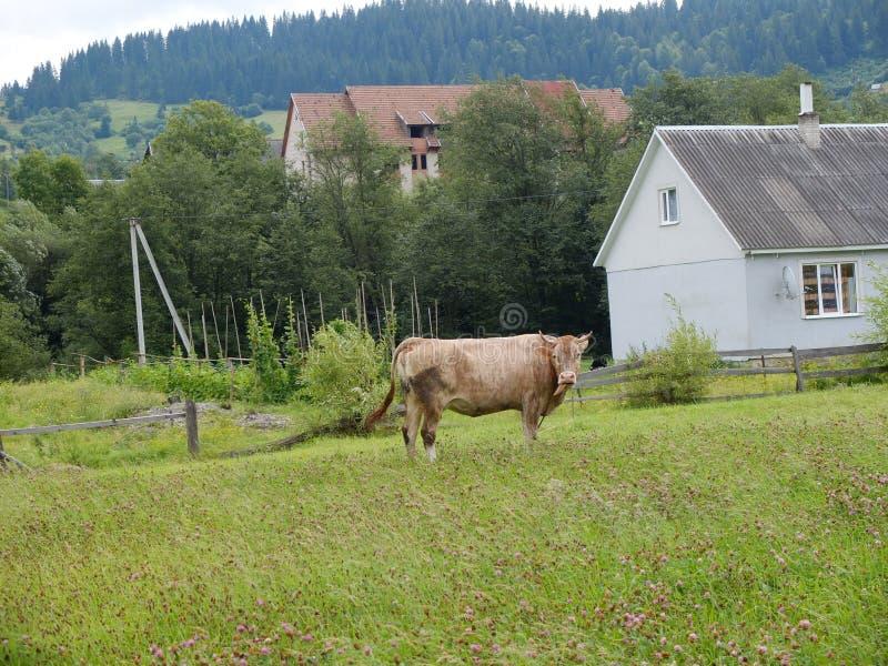 Den carpathian byn arkivfoto