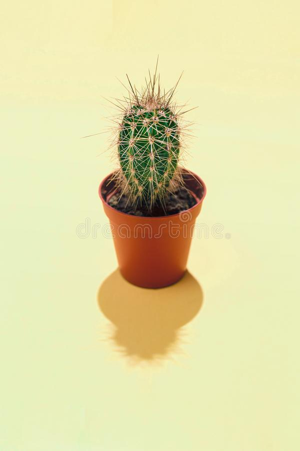 Den centrala vertikala sammansättningen för bästa sikt med en enkel vintergrön suckulent kaktus i brun blomkruka en hård skugga p arkivfoton