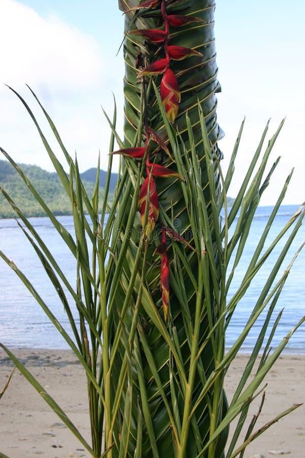den ceremoniella fijianleafen gömma i handflatan att väva arkivfoton