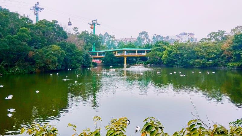 Den Chimelong safarizoo parkerar Guangzhou royaltyfri bild