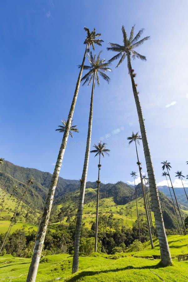 Den Cocora dalen med det jätte- vaxet gömma i handflatan nära Salento, Colombia royaltyfri fotografi