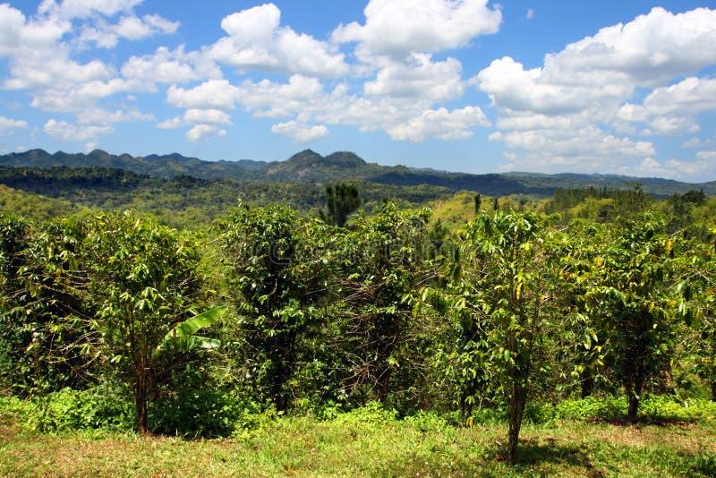 Den Croydon kolonin är en funktionsduglig koloni som kura ihop sig i utlöparen av de Catadupa bergen nära Montego Bay, Jamaica royaltyfri foto