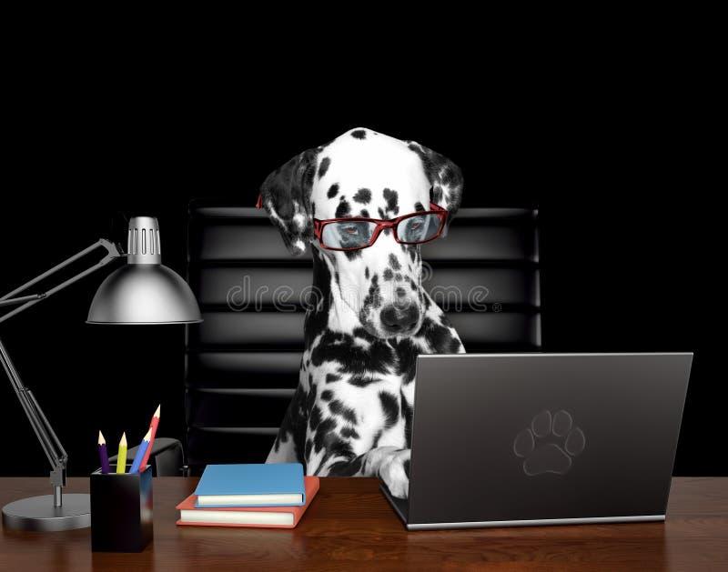 Den Dalmatian hunden i exponeringsglas gör något arbete på datoren Isolerat på svart stock illustrationer