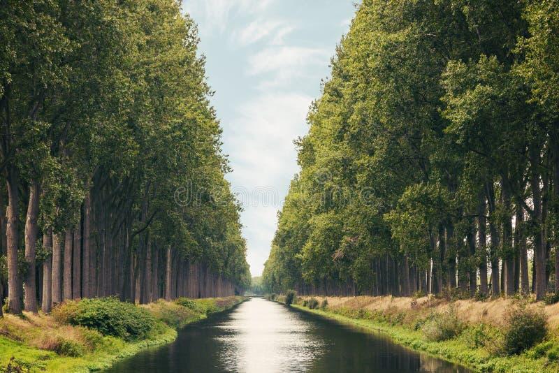 Den Damme kanalen i det belgiska landskapet av västra Flanders i sommar royaltyfria bilder