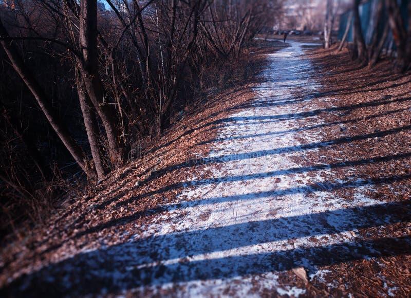 Den diagonala vinterbanan på parkerar bakgrund royaltyfria foton