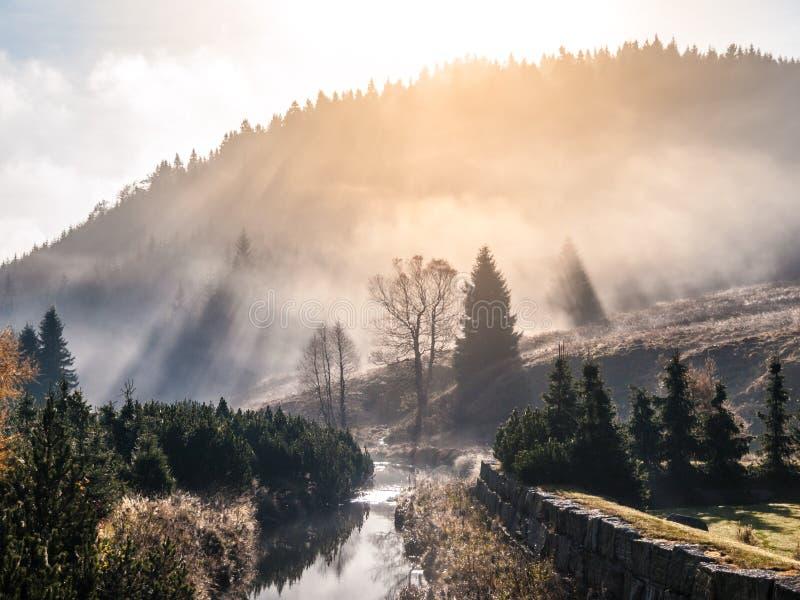 Den dimmiga morgonen i bergen med den första solen strålar arkivbilder