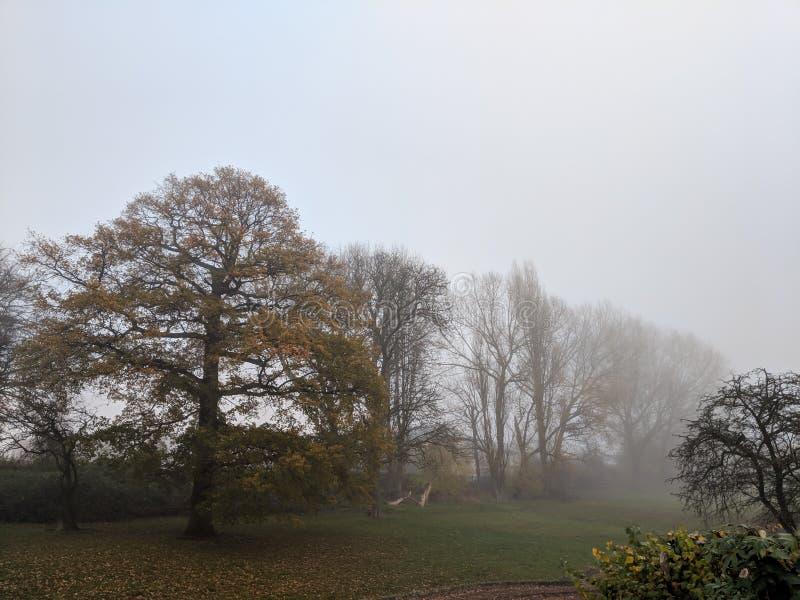 Den dimmiga morgonen i parkerar med träd arkivbild