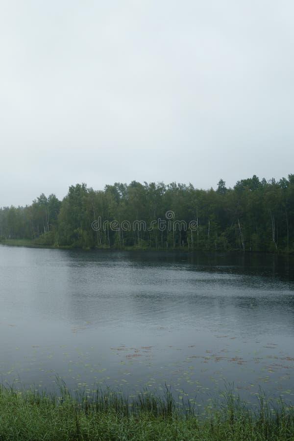 Den dimmiga morgonen på den scandinavian sjön med regn skvalpar på vatten royaltyfria bilder