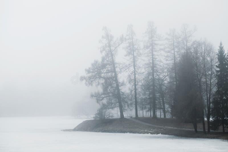 Den dimmiga vintermorgonen i vinter parkerar oisolerade trees royaltyfri foto