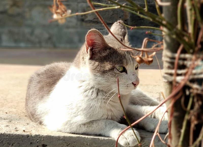 Den djärva härliga katten royaltyfria bilder