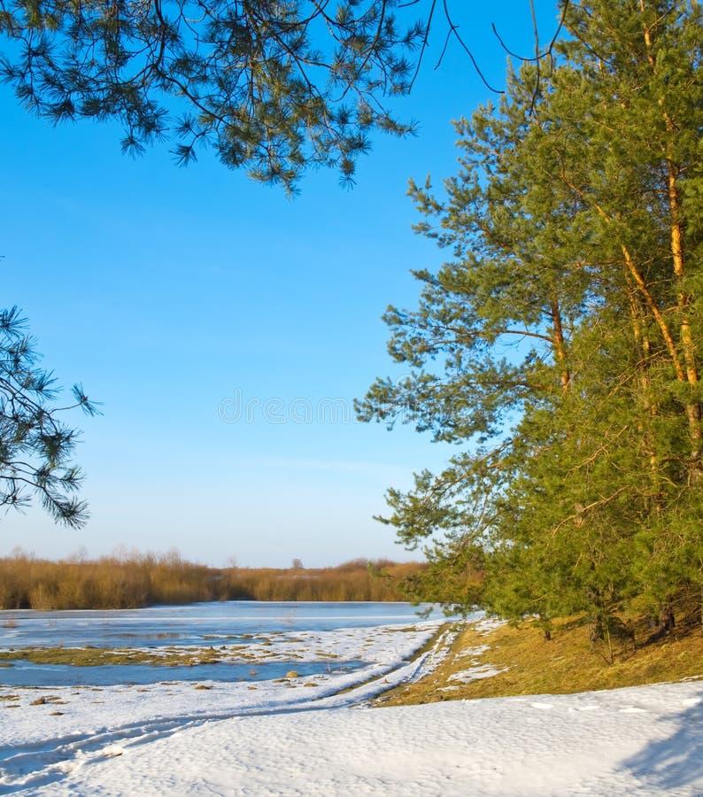 Djupfryst flod och trees fotografering för bildbyråer