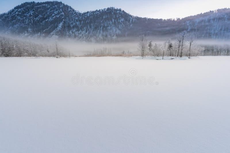 Den djupfrysta sjön Almsee i Upper Austria med några djupfrysta träd en dimma arkivbild
