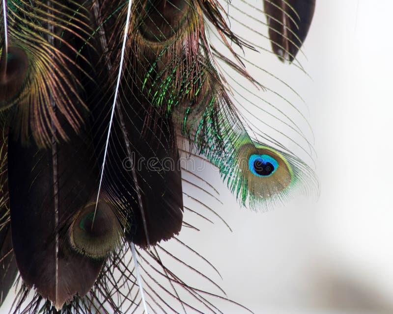 Den dröm- stopparen med fjädrar dragar och pryder med pärlor att hänga för rep Handgjorda Dreamcatcher royaltyfri fotografi