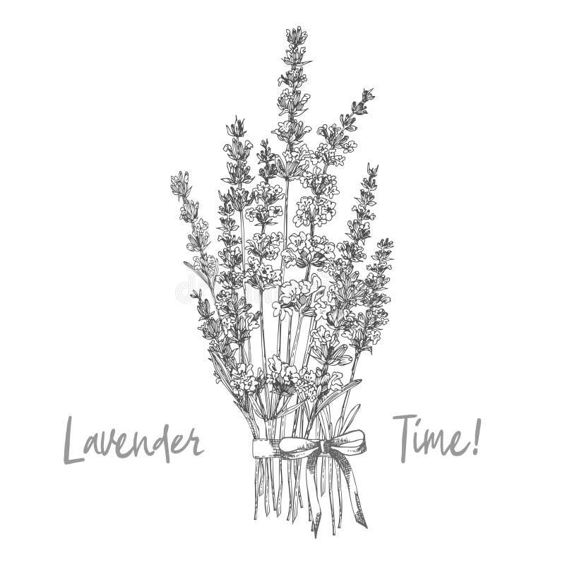 Den drog buketten av handen skissar av lavendelblomman och gulliga pilbågar som isoleras på vit bakgrund Frankrike provence retro stock illustrationer