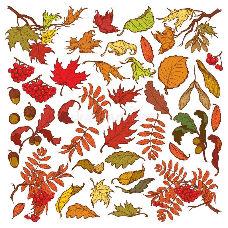 Den drog handen förgrena sig och sidor av träd för den tempererade skogen Hösten färgade den blom- uppsättningen som isolerades p vektor illustrationer