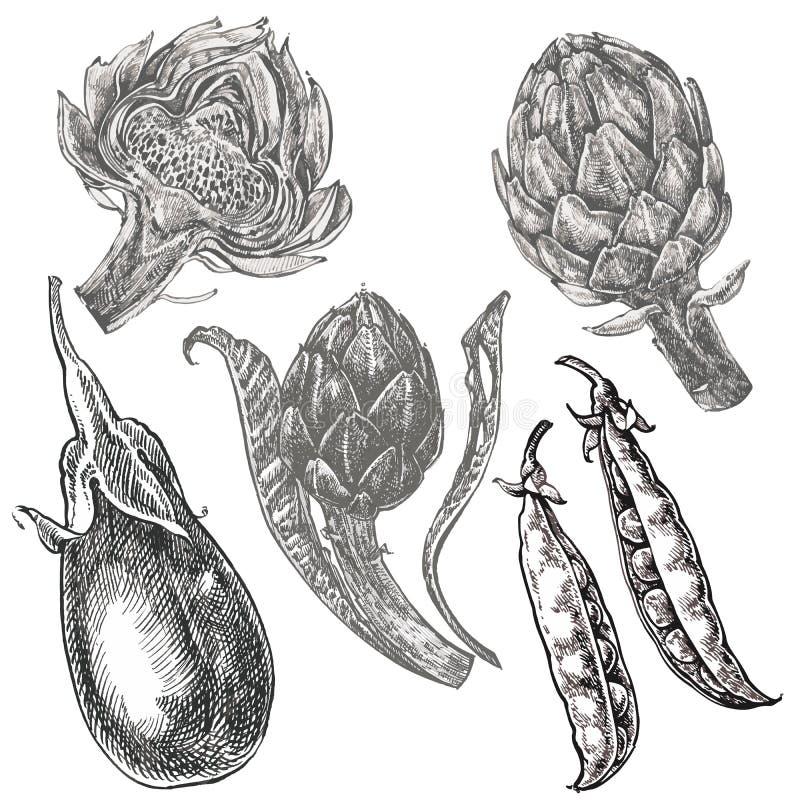 Den drog handen skissar aubergine, ärtor och kronärtskockan isolerad white för bakgrundscogwheel illustration Nytt ekologiskt för royaltyfri illustrationer