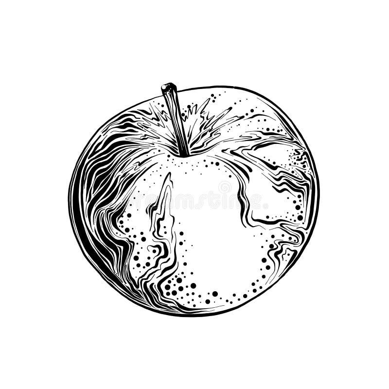 Den drog handen skissar av äpplet i svart färg bakgrund isolerad white Dra för affischer, garnering och tryck stock illustrationer