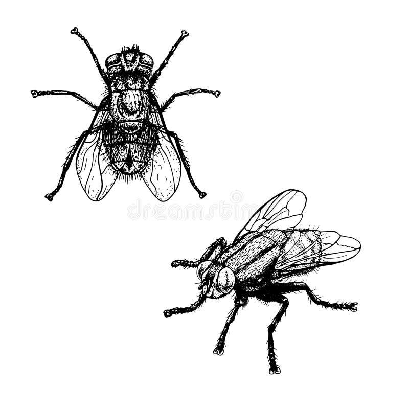 Den drog handen skissar av fluga också vektor för coreldrawillustration vektor illustrationer