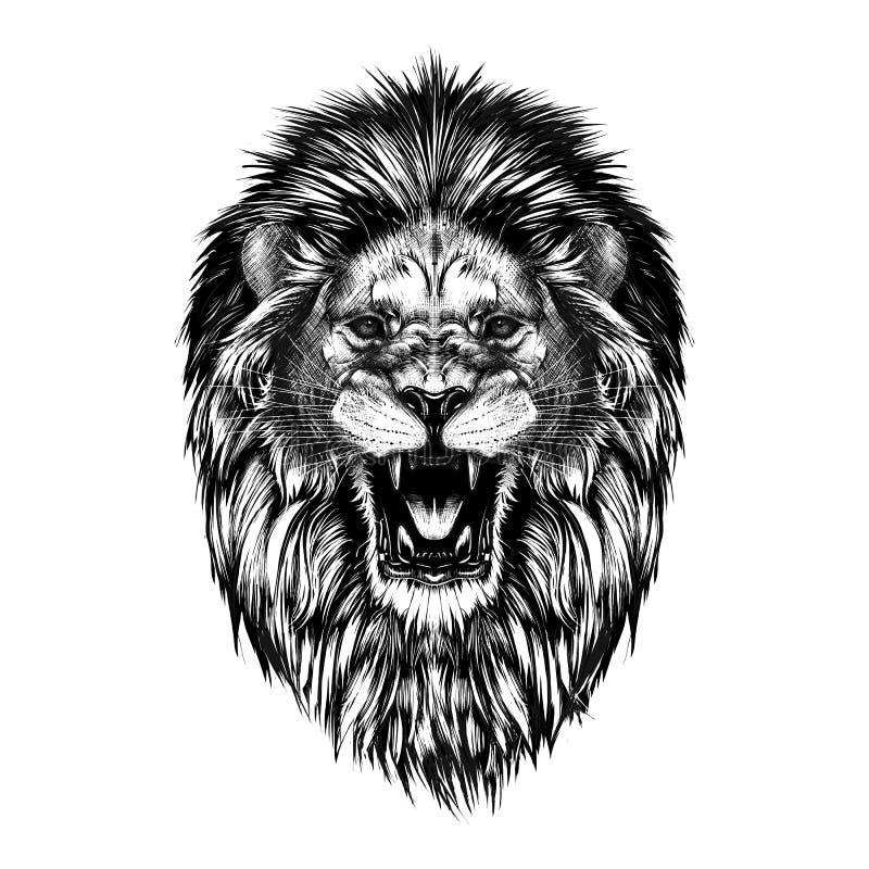 Den drog handen skissar av lejonhuvudet i svart som isoleras på vit bakgrund royaltyfri illustrationer