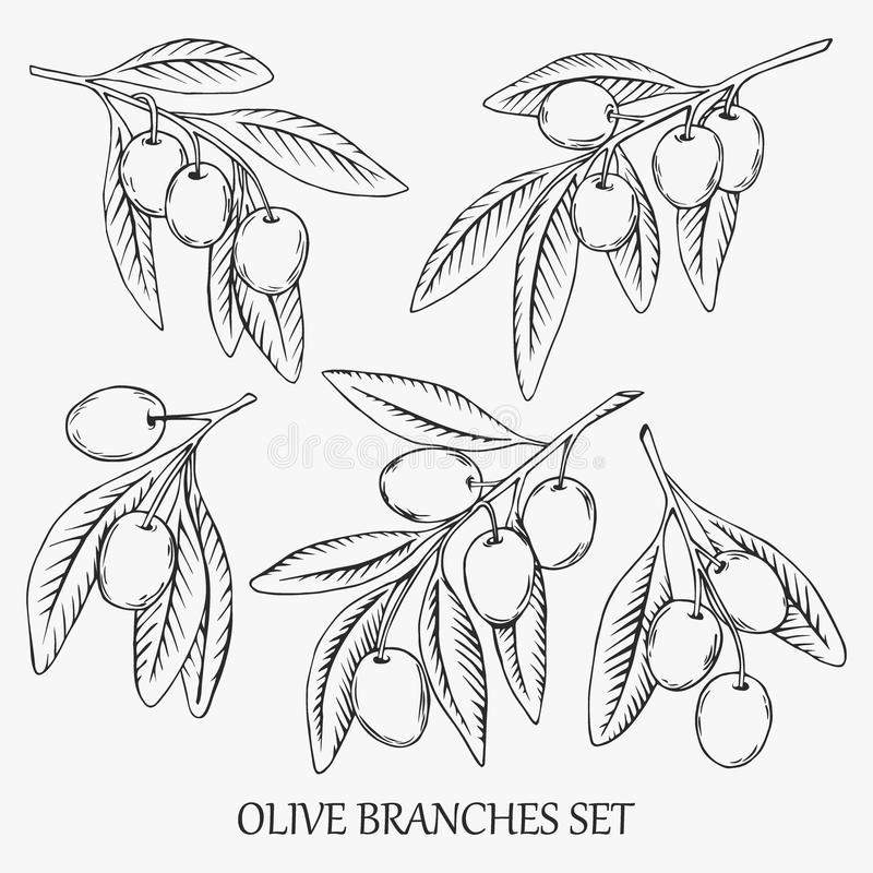 Den drog handen skissar av olivgröna filialer Vektorillustration med översiktsris stock illustrationer