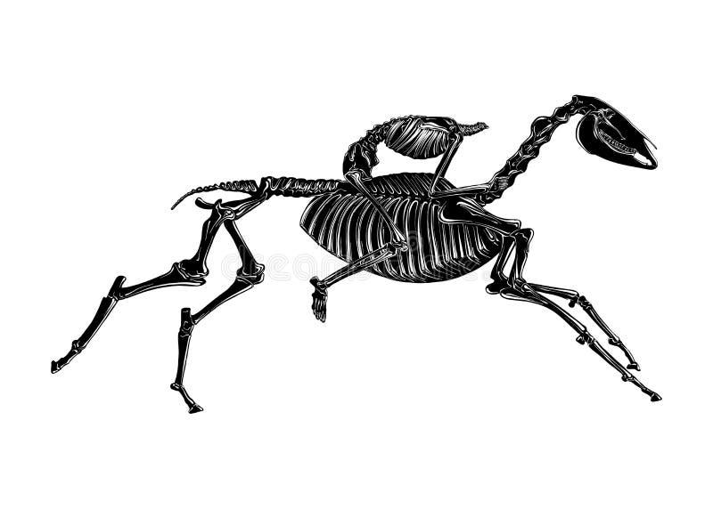 Den drog handen skissar av skelettet av den huvudlösa skickliga ryttaren i svart som isoleras på vit bakgrund Detaljerad teckning vektor illustrationer