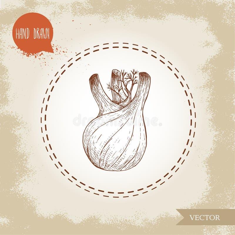 Den drog handen skissar fänkålkulan Kryddigt rota växten med sidor Ört-, krydda- och smaktillsatsvektorillustration vektor illustrationer